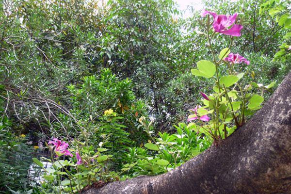 美丽异木棉什么时候开花