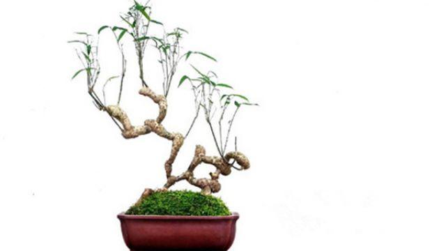 竹子盆景制作