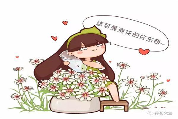 别人扔的小东西,拿来喂花,长疯了!