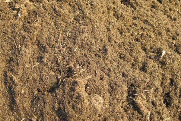 草炭土是什么