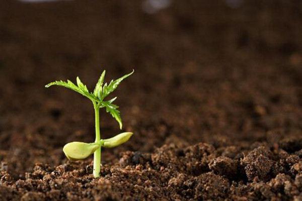 如何改善土壤透气性
