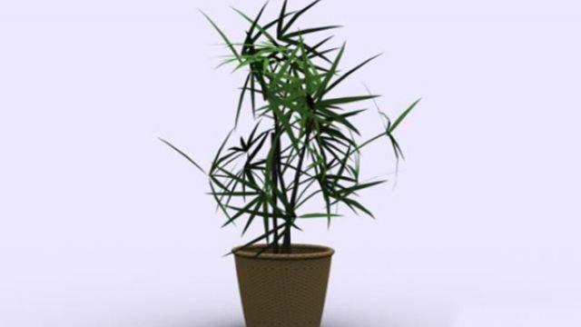 竹子的繁殖方法