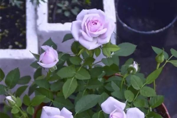 谁说没有花园就不能养花?窗台照样能做到