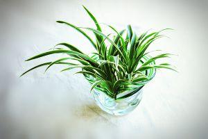 常见水培植物及养护方法