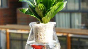 水培植物里可以养鱼吗