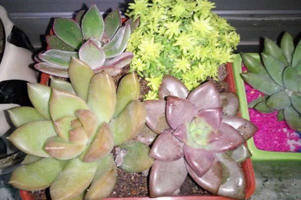 欧亿测速注册植物的药害及其处理