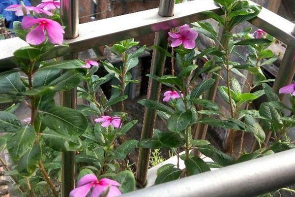 春季赏花应该注意什么