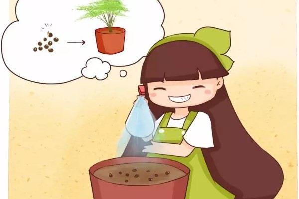 他养的文竹开了花,还结出100多个果,种土里全部发芽!