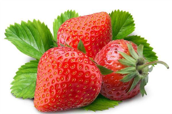 草莓的常见品种
