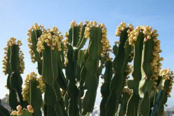 那些具有防辐射作用的植物
