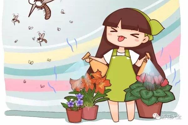 浇花时兑点料,有虫杀虫,没虫防虫!