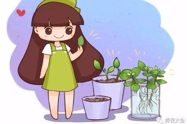 再便宜也别买,用这4个小方法,轻松养出10盆花!