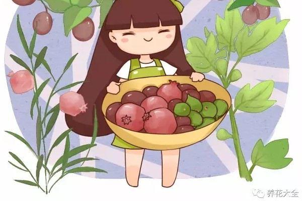 吃剩的水果撒盆里,一年结99个果,摘到手都酸!
