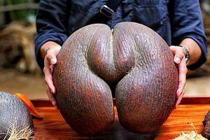 世界最恶心的水果,看一眼直接呕吐,你敢挑战吗