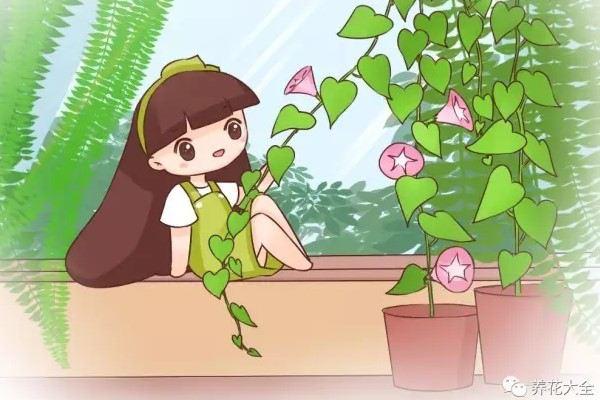 夏天种上这些花,空调都不用,太凉快了!