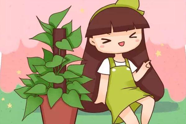 绿萝也能养成贵妇范,1盆美翻你的家!