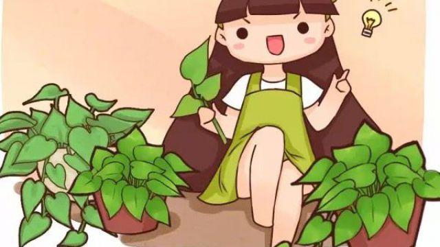 绿萝5种扦插方法,学会1种,家里就多得放不下了!