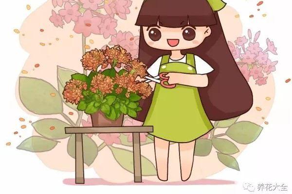 如何把你的花养成开花机器,花多到剪都剪不完!