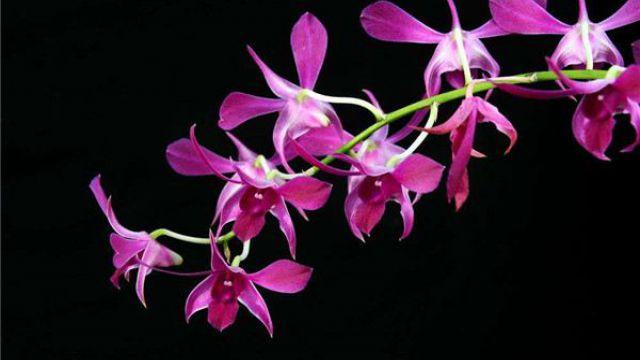 盘点花卉常用的五种杀菌剂