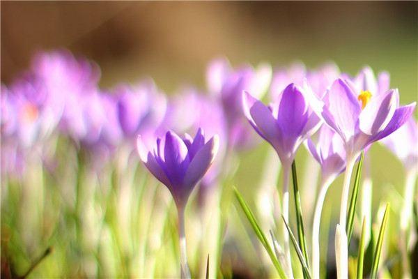 如何对花卉的花期进行调控