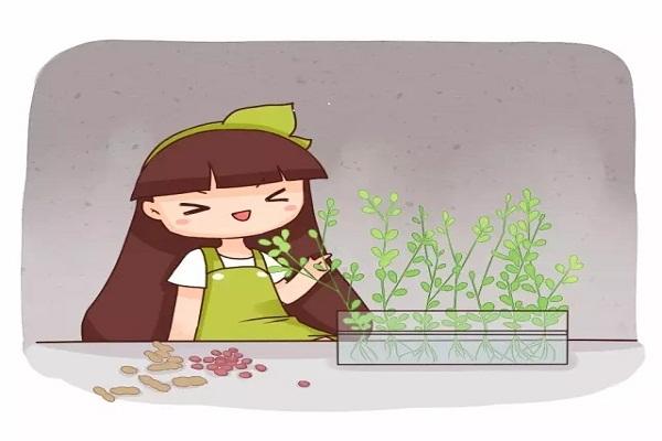 沤肥做菜当盆栽,1粒花生拿来养花,竟然这么好用!