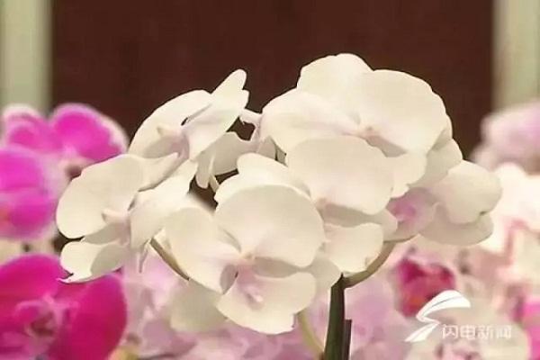 1棵价值2000万的花,被人偷走了!