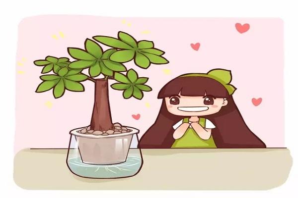 绿萝吊兰发财树,种土里不如养水里!