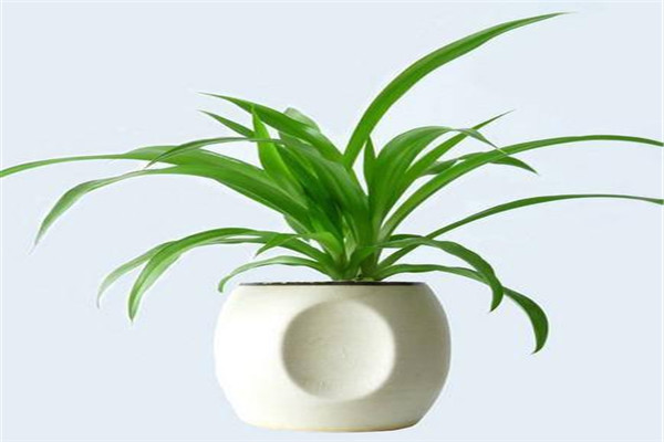 家中种满这类植物,一年四季绿意不断!