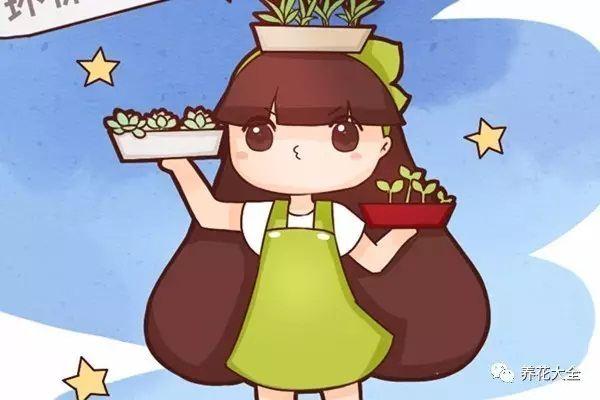 她养花10年从来没买过花盆,简单几招,废物变盆栽!