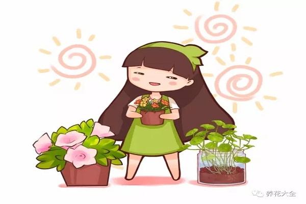 花市买花潜规则,老板绝不外传,震惊了!