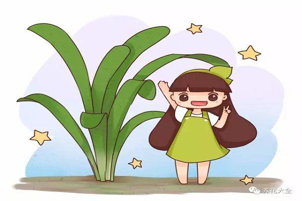别人扔花她捡花,不到1个月,从光头养到了爆盆!