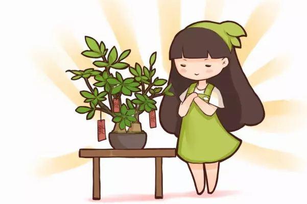 20种花草的风水意义,让你财源广进!