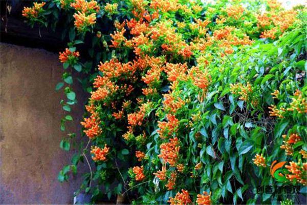 家里种上这五种植物,墙面瞬间亮了!