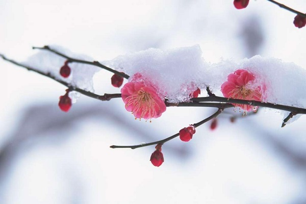 冬季需要格外注意防冻保暖的花卉大全!