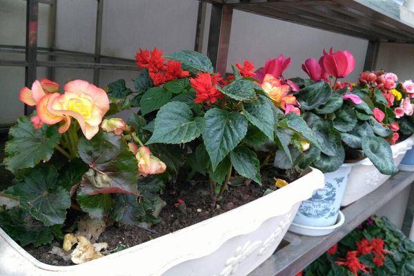盆花不开花?土壤肥料很重要!