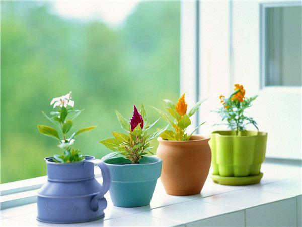 花卉植物过冬方法大全!