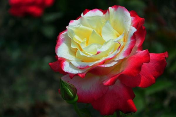 养了这十种花,香气盈满家!