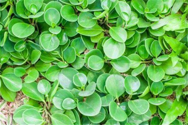 绿植长得慢怎么办?