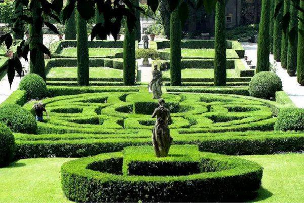 常见的十大绿篱植物