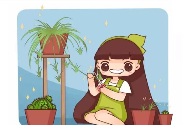 铜钱草叶子比碗大,绿萝疯长100米,到底咋养的?