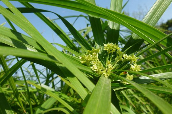 家里养水竹风水好吗?