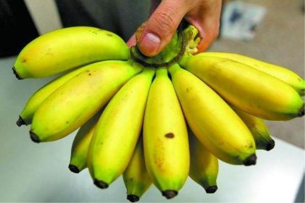 芭蕉的主要价值