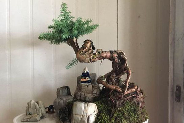 澳洲杉怎么修剪