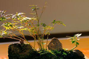 怎么制作紫竹盆景?这样做超艺术!
