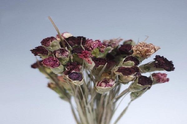 康乃馨干花制作方法