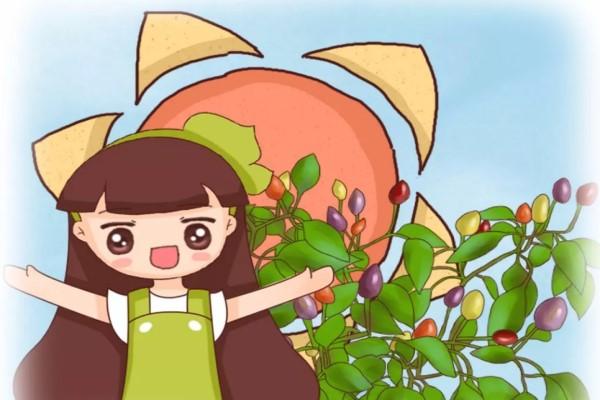 阳台种五彩椒,熊孩子以为是樱桃,竟然给偷走了!
