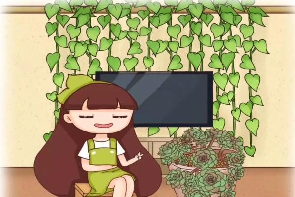 绿萝窜上墙,多肉胖成球,栀子开满枝,服了!