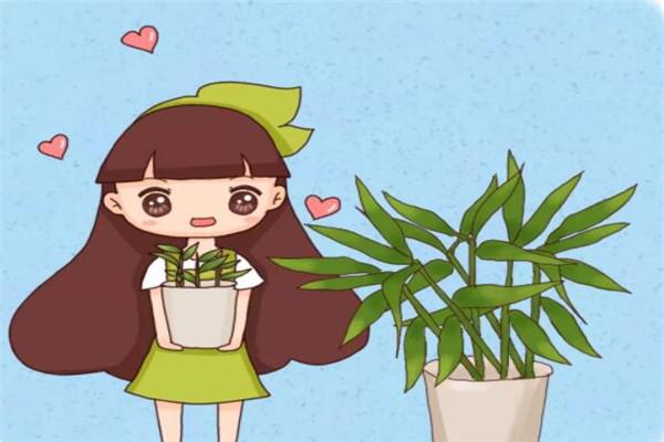 发芽的姜块别扔,比富贵竹好养,又高又绿还能吃!