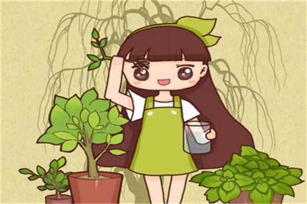 绿萝栀子…总发黄?神仙水里泡一下,叶子油亮疯狂开花!