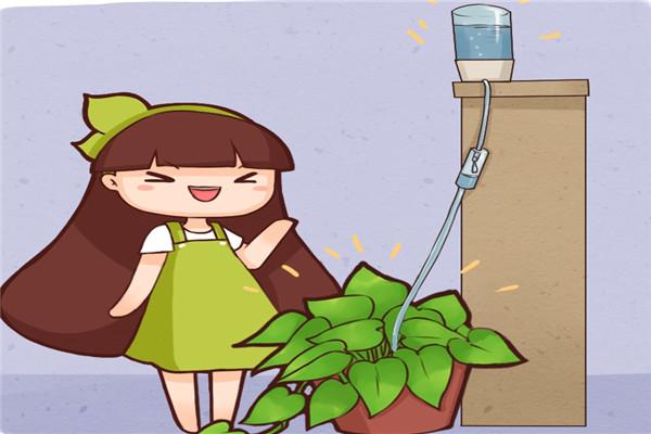 玻璃瓶上绑根绳,吸水花盆自己做,1个月不浇花也死不了!